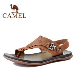 Camel/骆驼 2344065