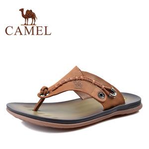 Camel/骆驼 2344064